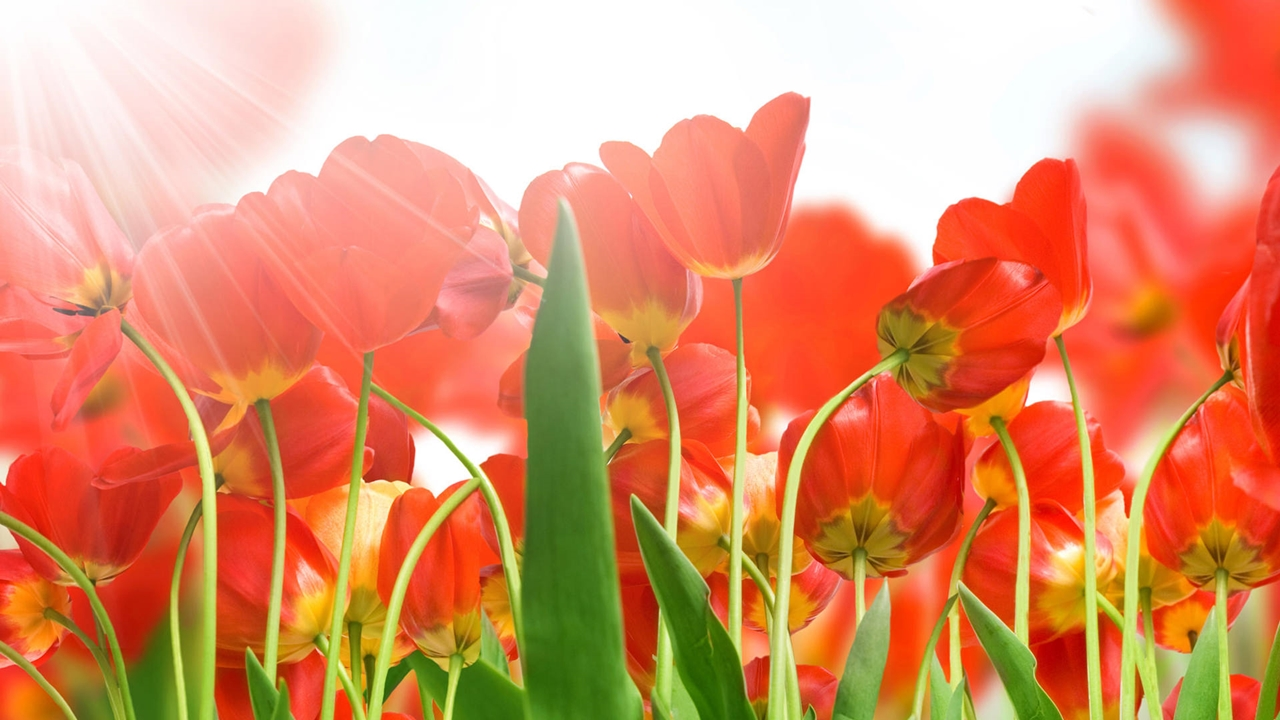 Học bổng du học Hà Lan Orange Tulip 2016-2017