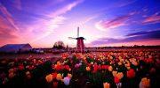 Đại học KHUD Fontys – Điểm đến du học Hà Lan chất lượng với chi phí vô cùng hợp lý!