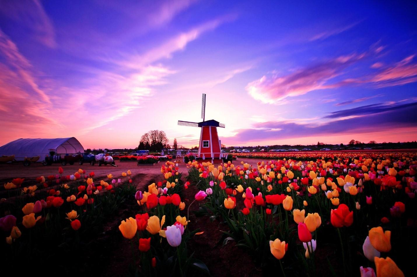 Hà Lan – quốc gia châu Âu xinh đẹp nổi danh với hệ thống giáo dục tiến bộ